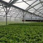 vt hydroponics